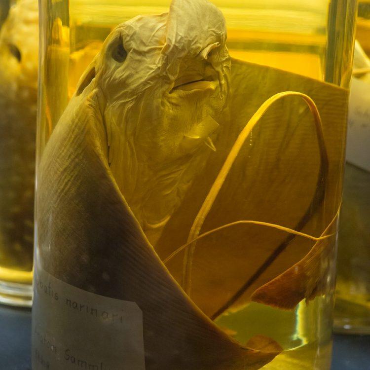 Nasssammlung des Berliner Naturkundemuseums