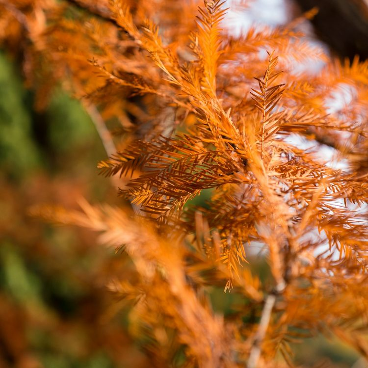 Die Farben des Herbstes im Botanischen Garten in Berlin