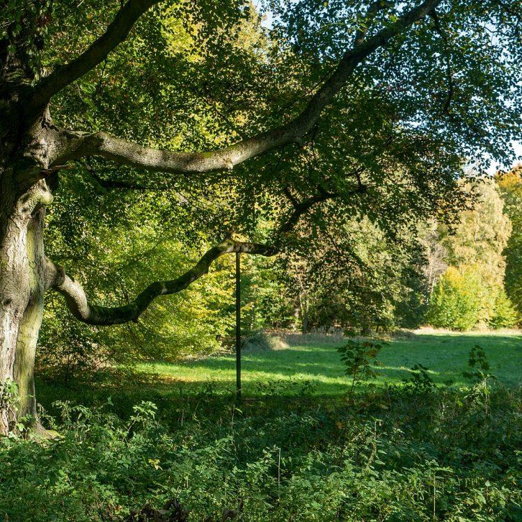 Alter Baum im Hohen Fläming