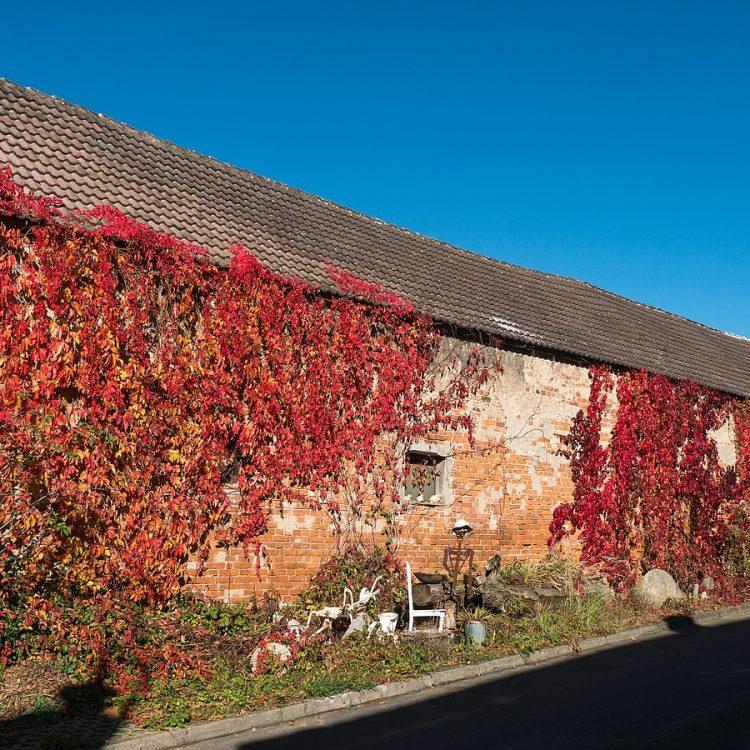 Rotes Haus im Hohen Fläming